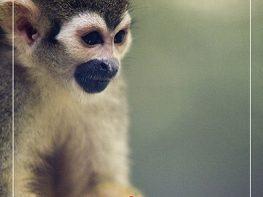 zoologico guadalajara; zoologico de guadalajara; zoologico; zoologico de guadalajara precios; zoologico guadalajara precios; guadalajara; gdl;