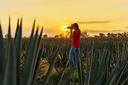 gdl; guadalajara; tequila; tequila express; tren a tequila; paisaje agavero; tour guadalajara jalisco;pueblo magico tequila